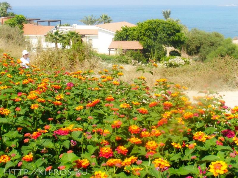 Кипр октябрь цены